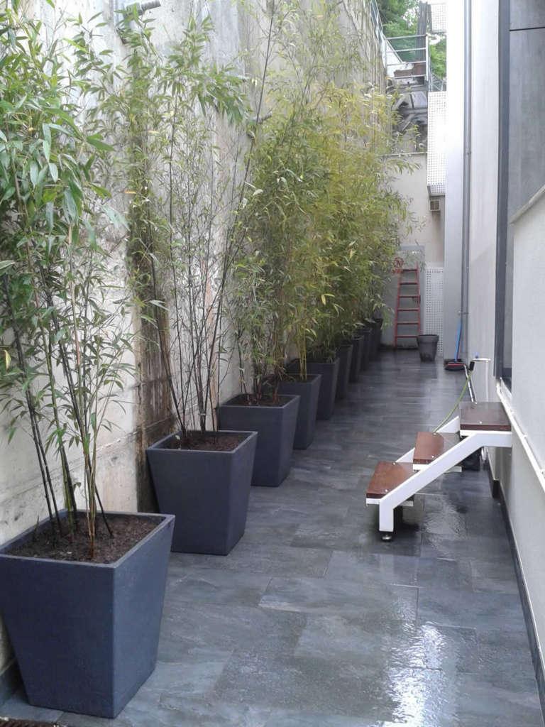 Bambu Decoracion Comprar ~ Decoraci?n natural con bambu  Jardiner?a Donostia Lorezaintza