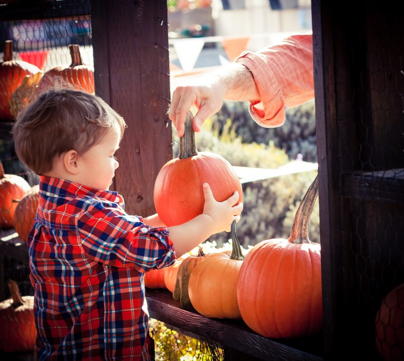 PUMPKIN PATCH 2015: SPOONER FARMS