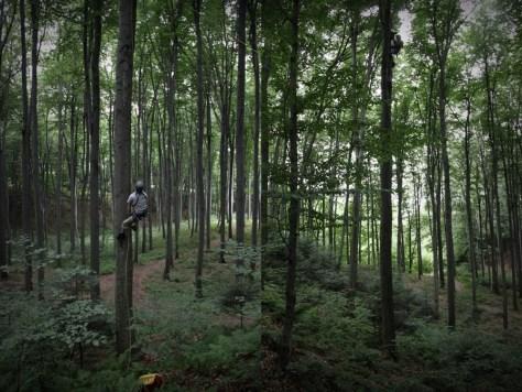 zbieranie keszy z drzew