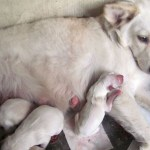 Ginny Gave Birth (AGAIN!) + Dogs Pictorial