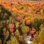 peak fall color from river to mountain top