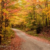 Fall foliage update for Maine & reader question