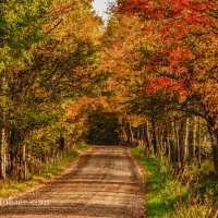A New England Scenic Autumn Road