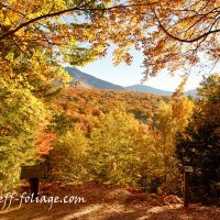 Forecasts & Foliage Reports for 2013