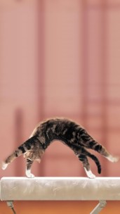Gymnastic_cat