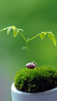 young_plant_2