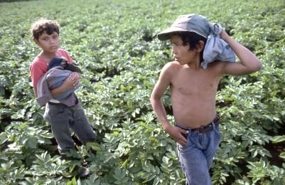 Boys at a Farm