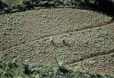 Men Working in a Field
