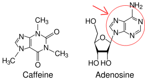 Caffeine_and_adenosine_svgS