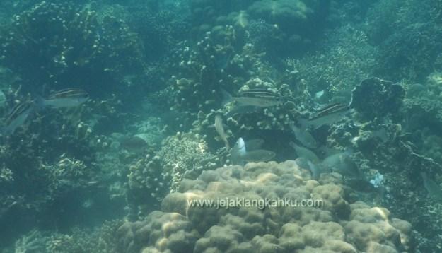 snorkeling pulau pahawang lampung 7