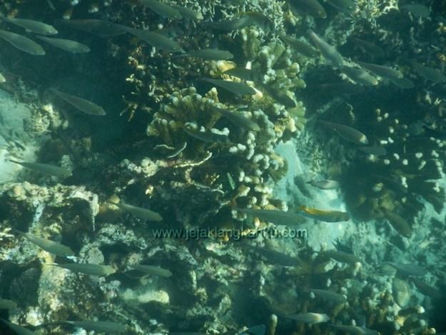 snorkeling pulau pahawang lampung 8