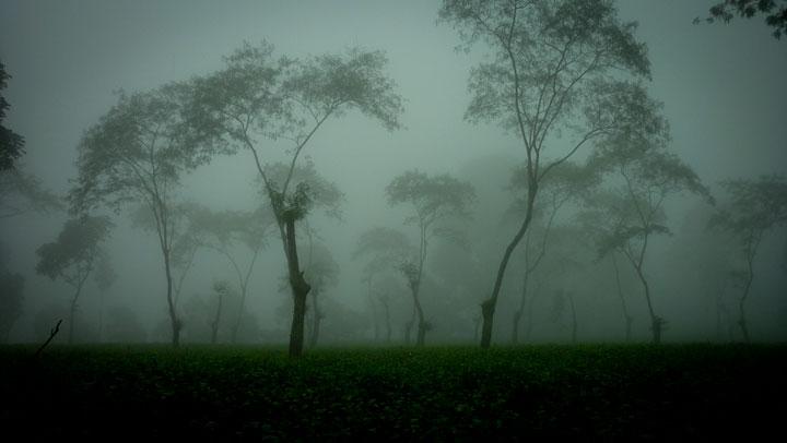 kebun teh diselimuti kabut