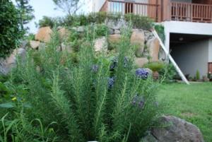 data herbs sm DSC 0226