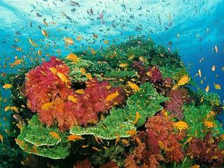 gambar taman laut pantai bunaken