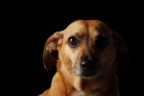 dog_portrait_d.jpg