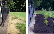 Before and after, planting blueberry bushes