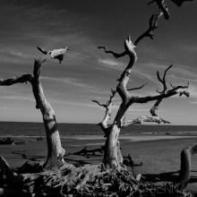Sneak-Preview-Jekyll-Island-Beach-Wedding01