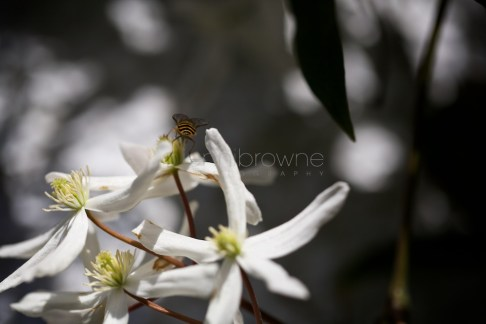 my garden _ 4 (1)