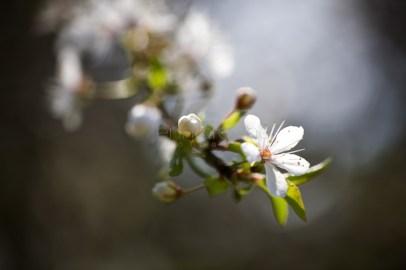 my garden _ 7