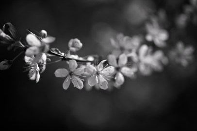 my garden _ 8