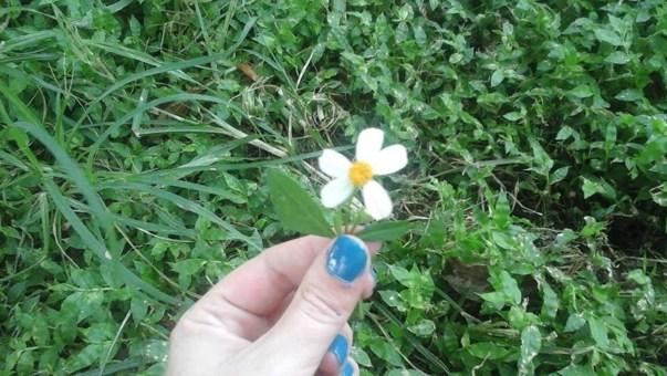 Daisy in Fingers
