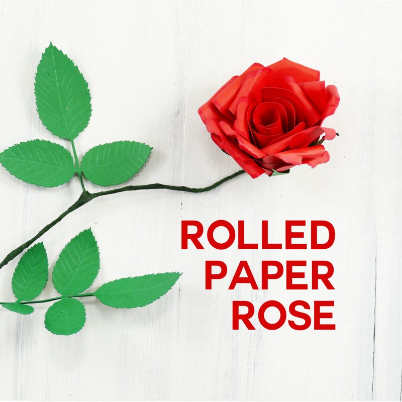 Large Of Help Me Find Roses