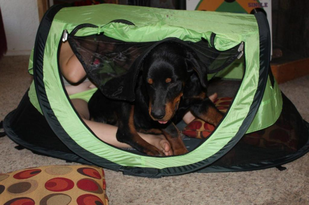 IMG 1694 1024x682 WOW Mom This Travel Tent Is Way Better Than Camping In A Box!