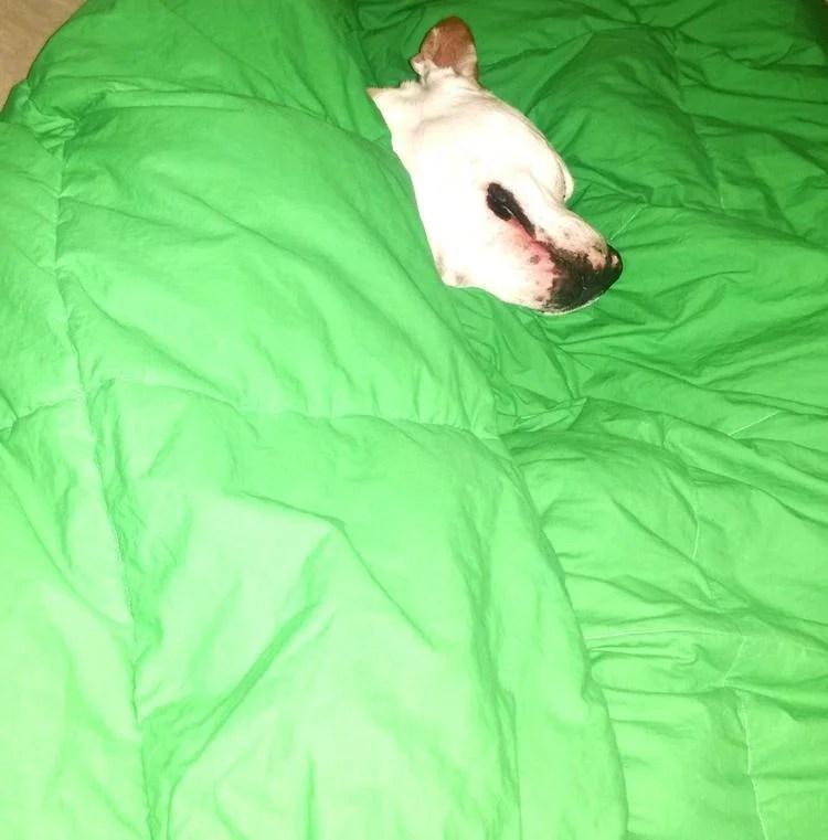 Don't Miss ALPO's Blog Dog Video's #HappyStartsHere!