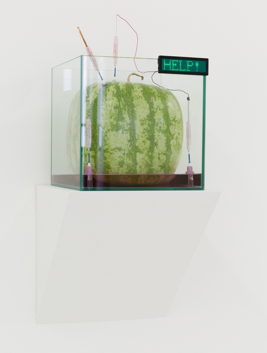 Max Hooper Schneider - Genus Watermeloncholia, 2014, bioengineered square watermelon, glass cube aquarium, UV electrolyte bath, soil, actinic light fixture, plastic ports, copper wire, battery operated digital sign, 10