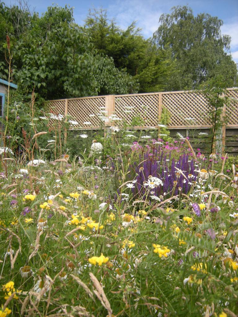 meadow July 2015