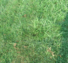 Here's the hole my son ran into while mowing.