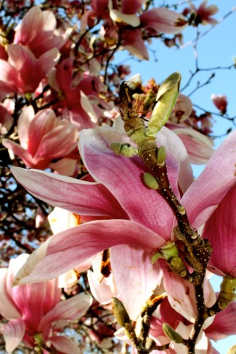 Garden Photography