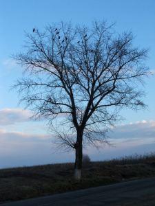 winter-tree-with-birds