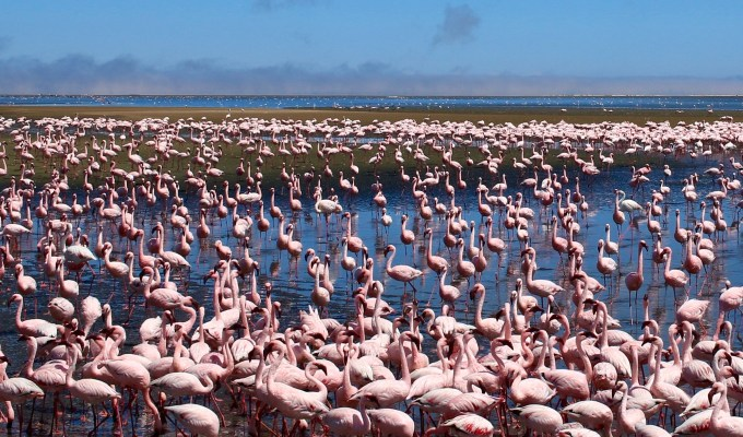 Salty Flamingos and Other Stories from Namibia {Namibia – Part 3}