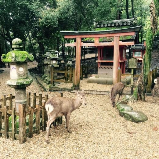 Nara Japan - deer