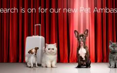 virgin australia pets airline