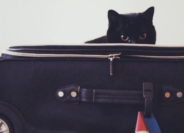 travel cats instagram