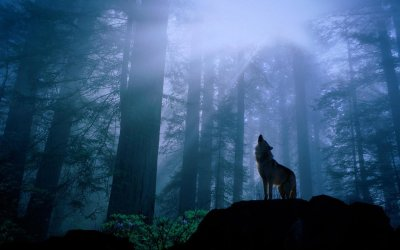Download Wolf Wallpaper 1080p Is Cool Wallpapers
