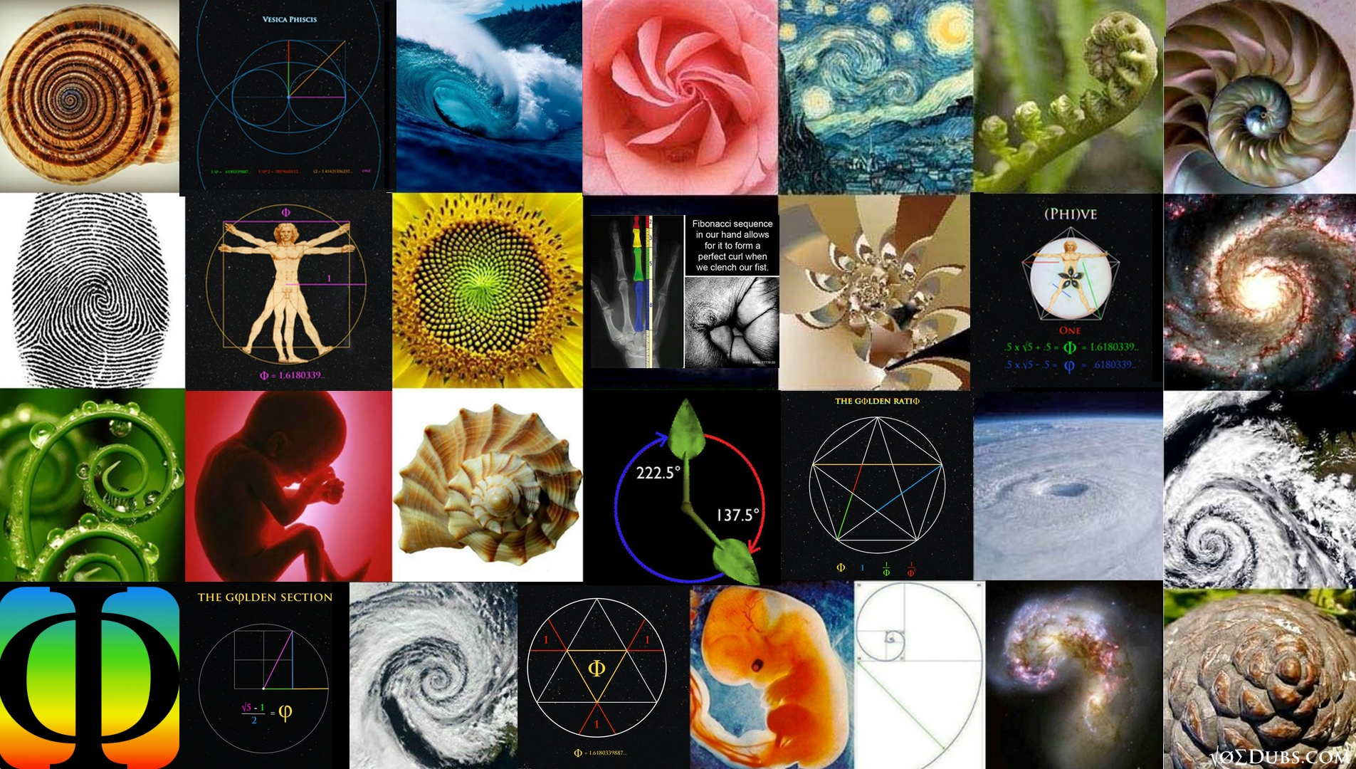 The Divine Proportion Golden Phi Nomena Of Nature