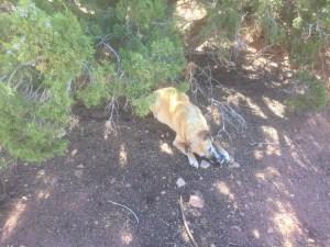 dogfoodcan
