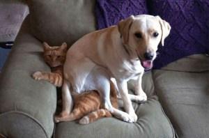 bad-dog-sitting-on-a-cat