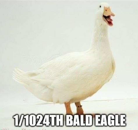warren - 1-1024th bald eagle
