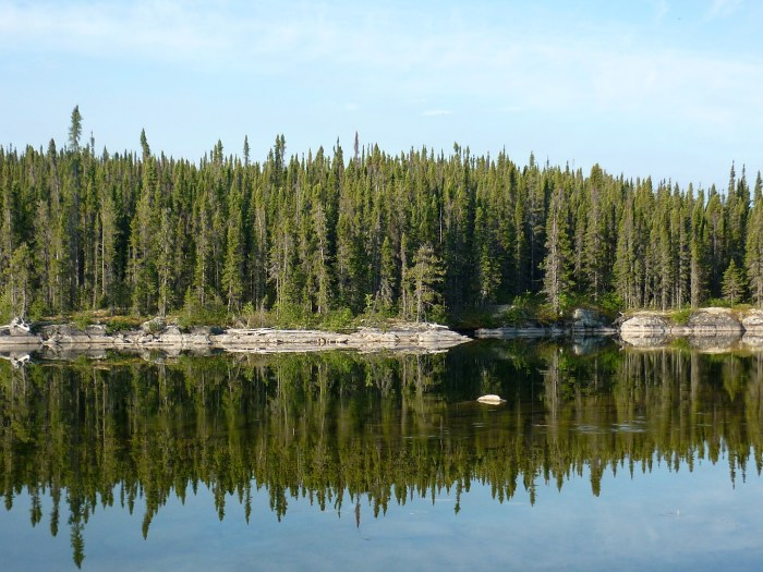 Ubiquitous black spruce reflected in crystal clear water
