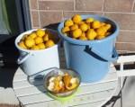 柚子人気レシピのジュレとジャムとねり柚子と柚子茶の違いは?