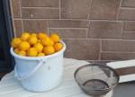 大量の柚子の保存と?その加工方法と人気レシピ、利用の方法は?(塩柚子編)