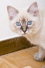 Katten Frasse