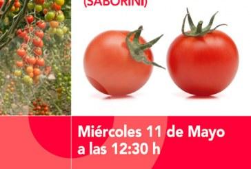 Día 11 de mayo. Jornada de tomate de HM Clause en Albuñol