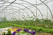 Nuevos cursos de formación en agroecología