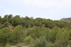 Pinares de Sierra Espuña, Murcia. Viajeros blogueros por España