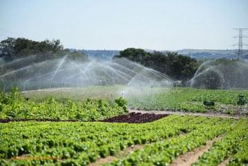 La Comunidad de Madrid invertirá 8 millones euros en impulsar la agricultura